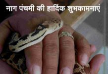 A Man Is Holding a Snake