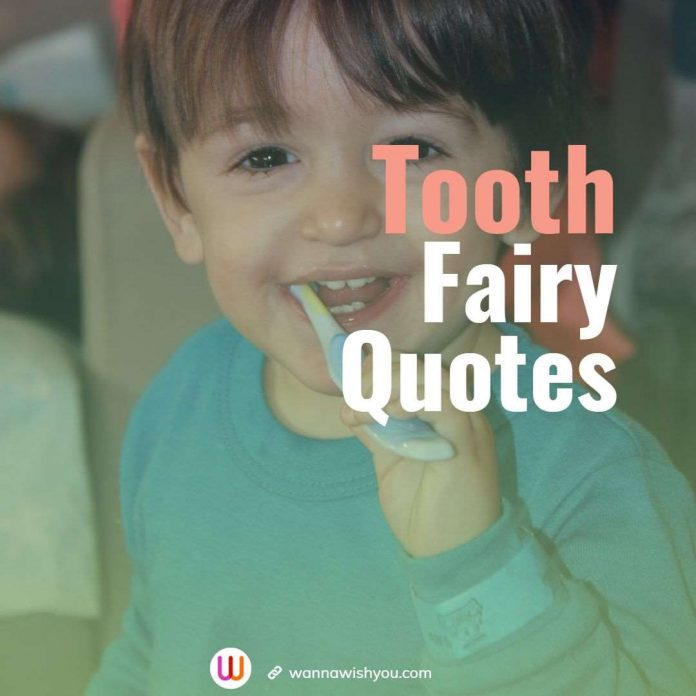 Tooth Fairy Quotes